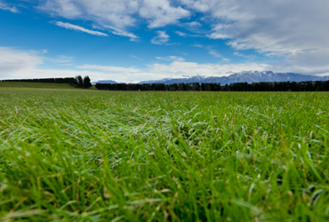 Healthy, green pasture